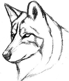 236x279 How Cool Dose This Look. Wolves Drawings, Drawing