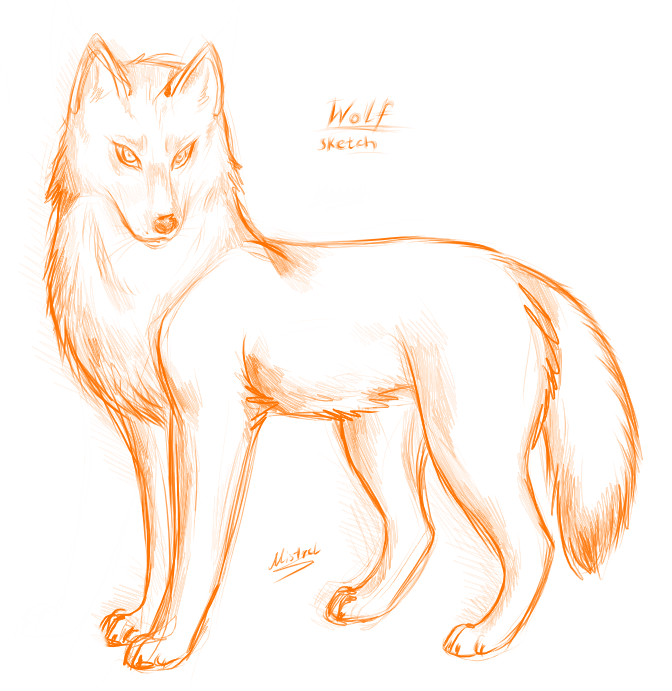 672x691 Red Wolf Drawing
