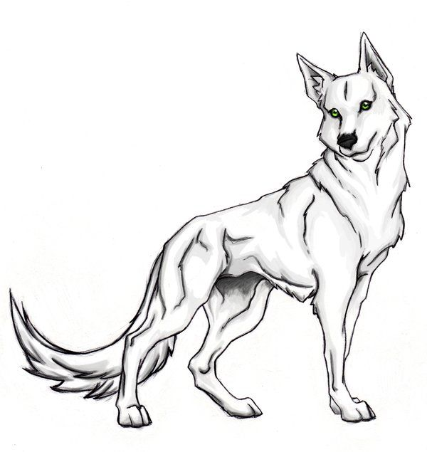 600x635 25 Best Wolf Coloring Pages Images Drawings, Free