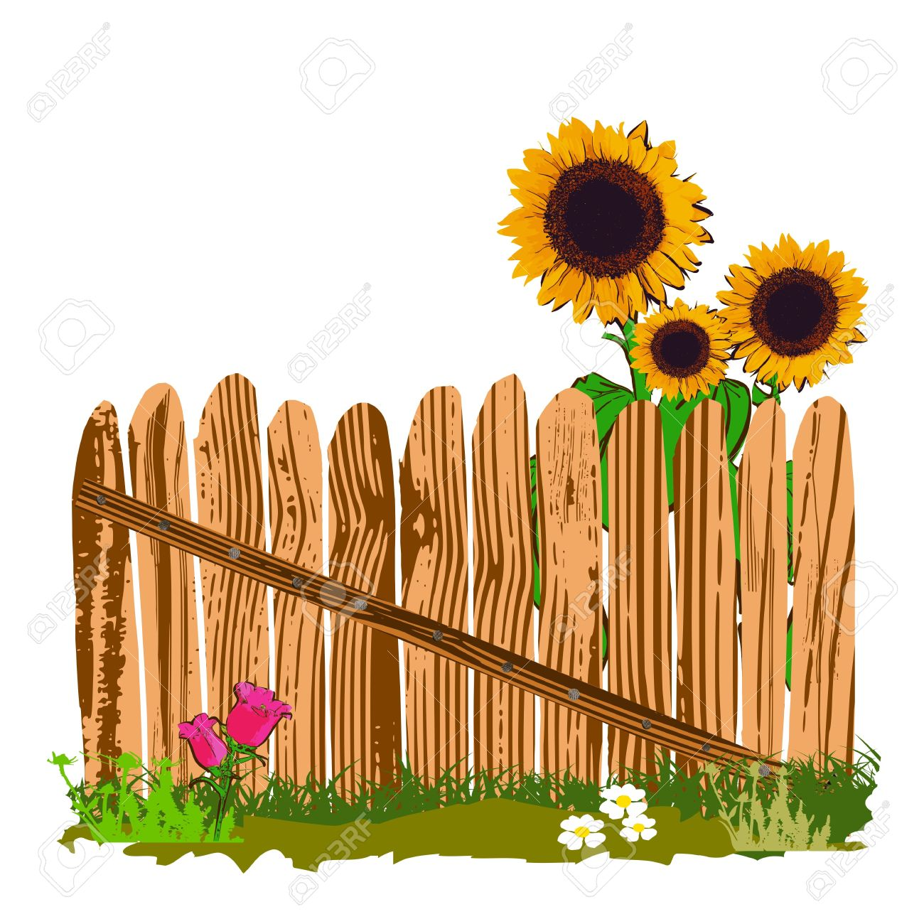 1300x1300 Wooden Fence And Sunflowers