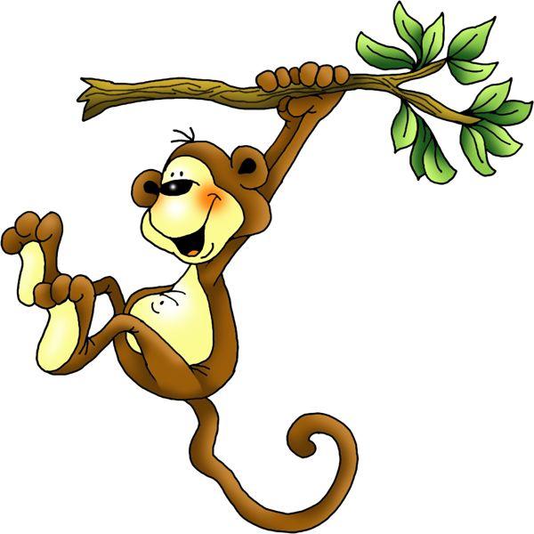 600x600 1481 Best Monkeys Amp Apes Images Monkeys, Orangutans