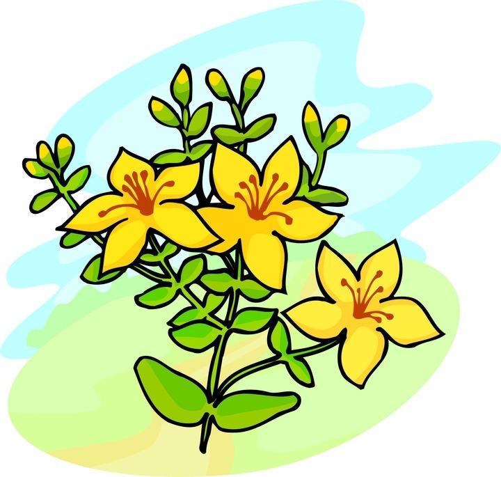 720x685 Yellow Flower Clipart Yellow Bell