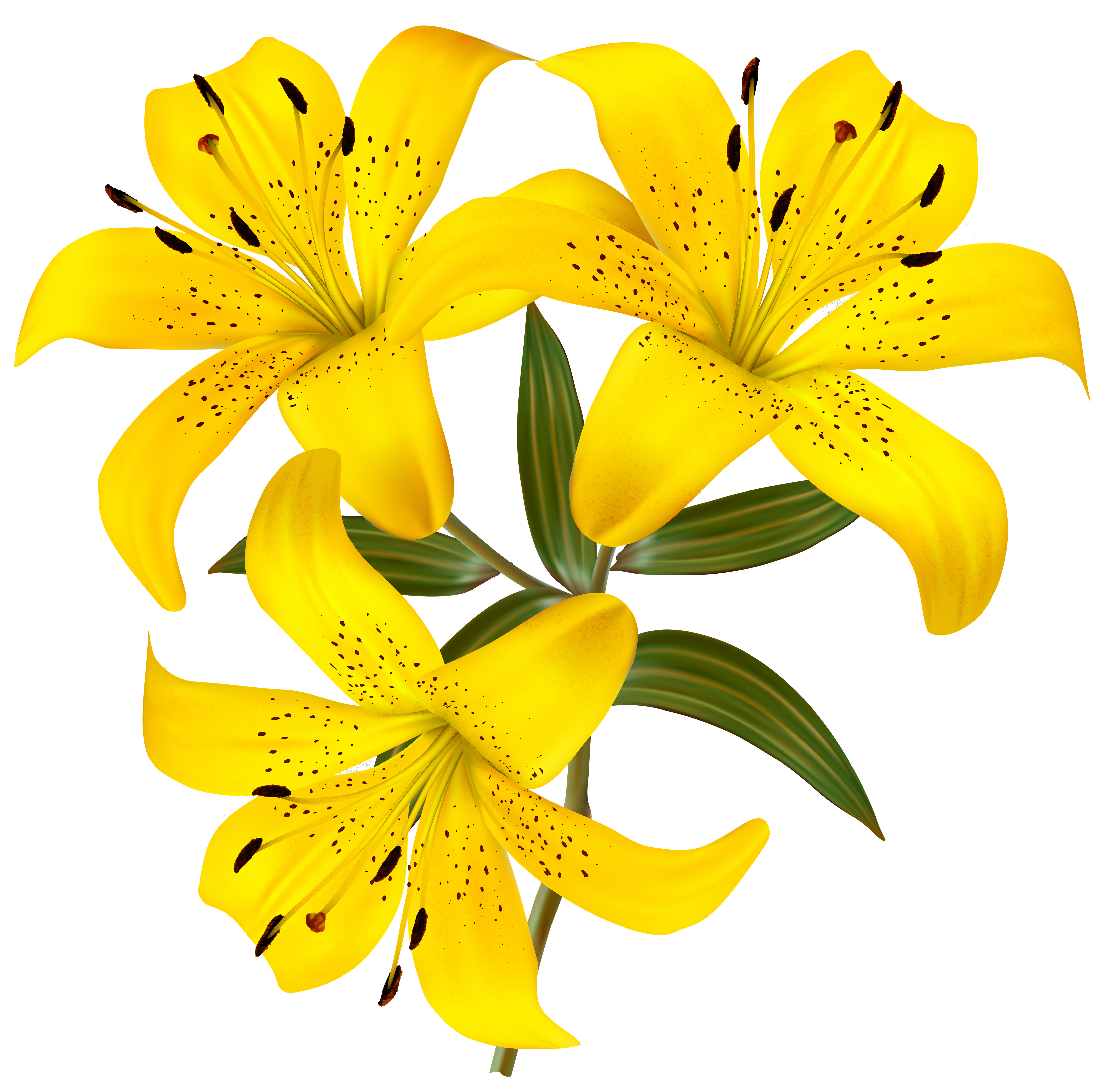 4394x4348 Yellow Lily Flower Clip Art Cliparts
