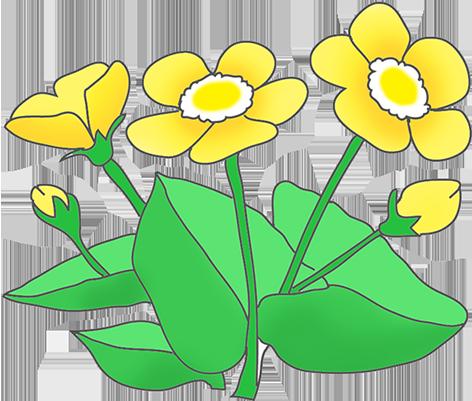 472x401 Buttercup Clipart Flower Template