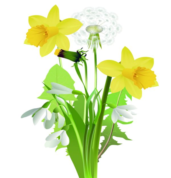 600x624 225 Best Flower Clipart Images Pictures, Flower
