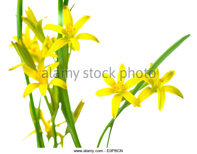 640x500 Yellow Flower Clipart Yellow Star