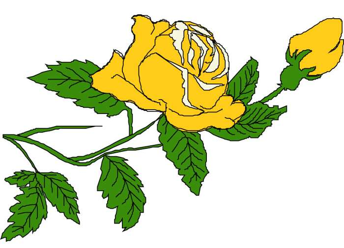 700x505 Yellow Rose Clip Art Many Interesting Cliparts