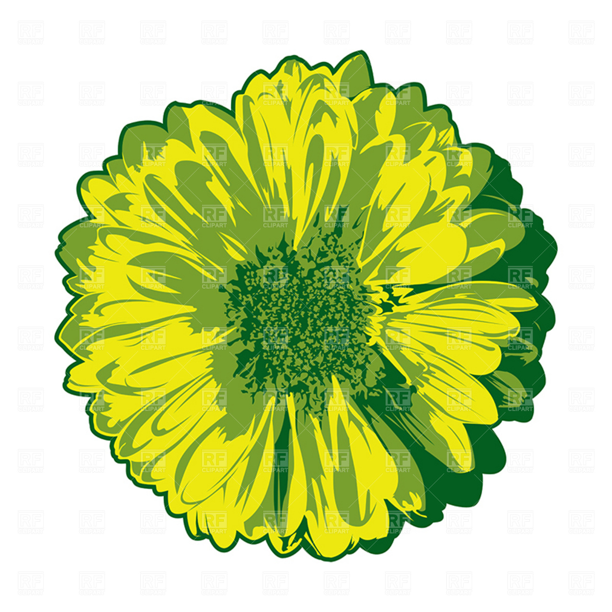 1200x1200 Gerbera Isolated On White Royalty Free Vector Clip Art Image