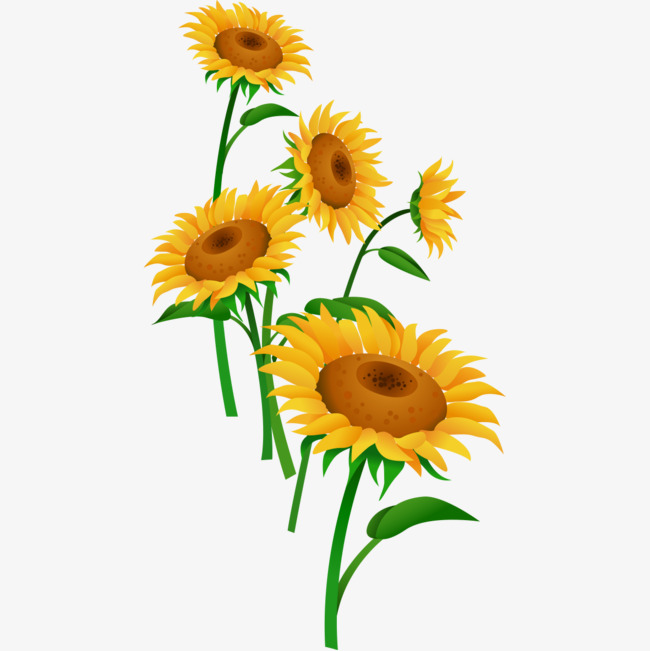 650x651 Cartoon Yellow Daisy, Cartoon Flowers, Cartoon Daisy, Flowers Png