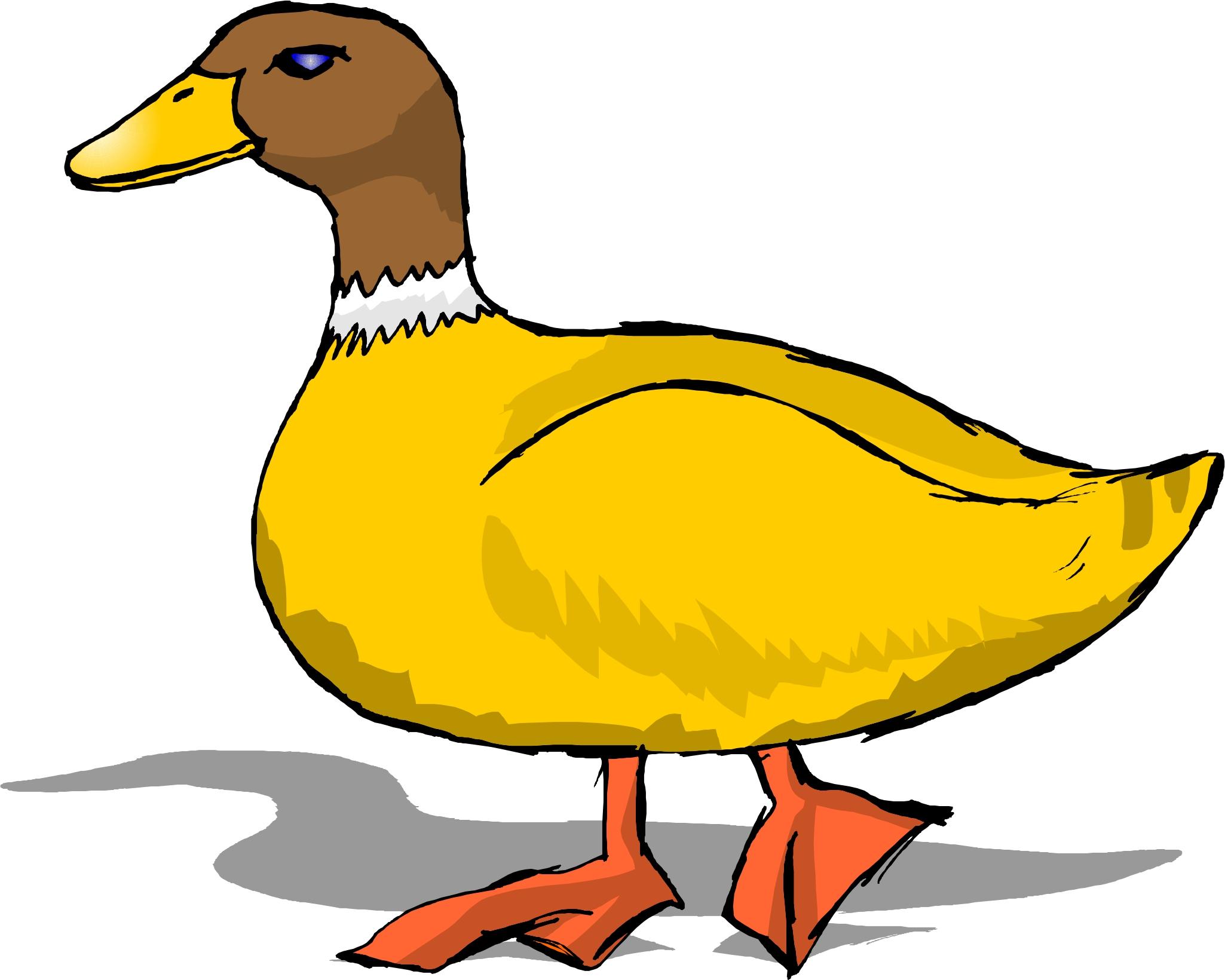 2050x1640 Duck Clip Art Outline Free Clipart Images