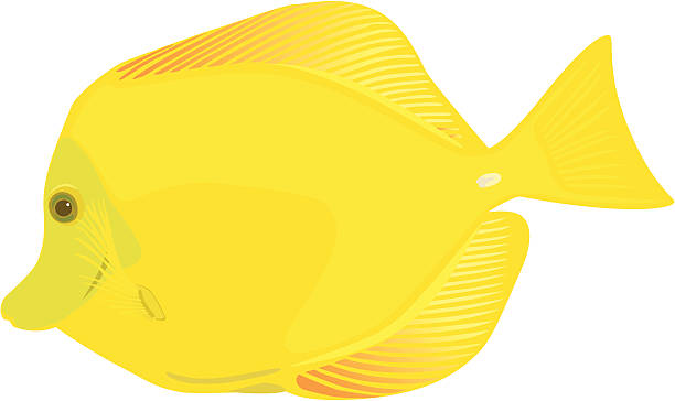 612x364 Fish Clipart Yellow Tang