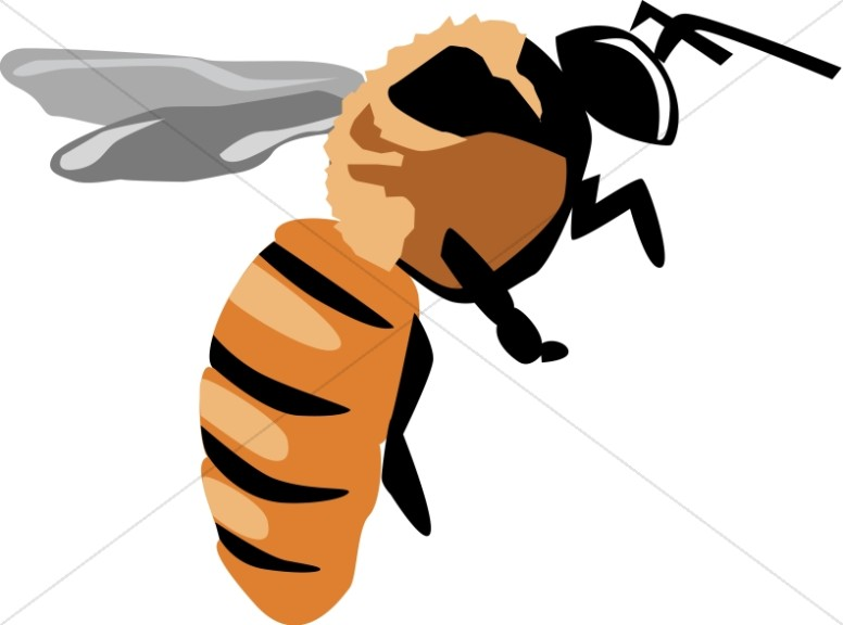 776x576 Yellow Jacket Bee Nature Clipart
