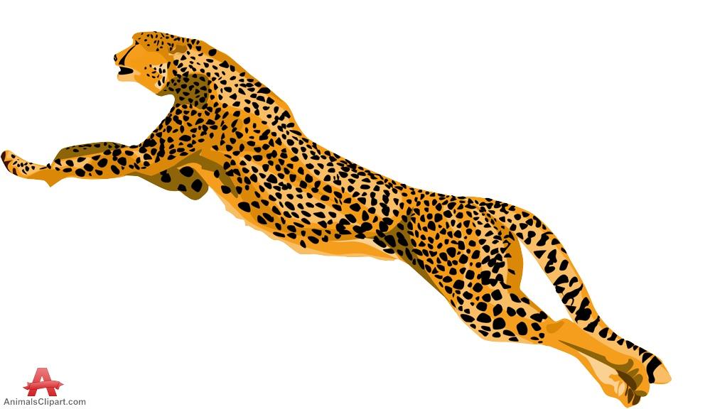 999x576 Leopard clipart cheetah