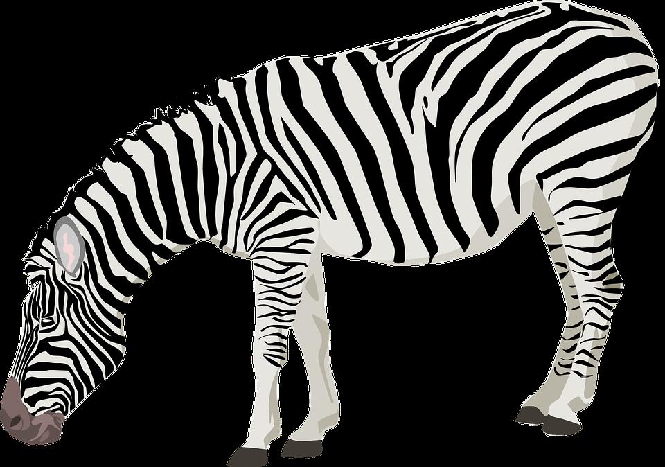 960x674 Stripe clipart zebra animal