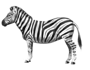 292x228 Free Black and White Zebra Clipart, 1 page of Public Domain Clip Art