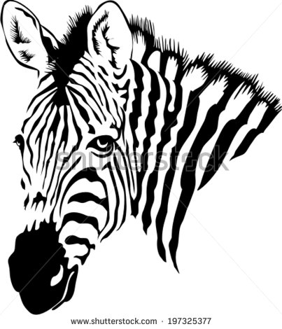 403x470 Drawn Zebra Black And White