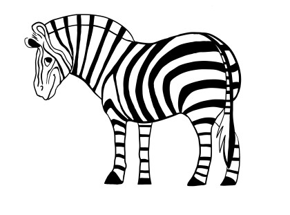 420x311 Zebra White Background Images All White Background