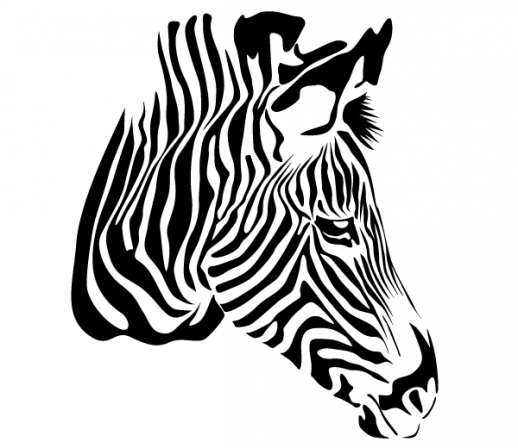 518x448 Zebra clipart