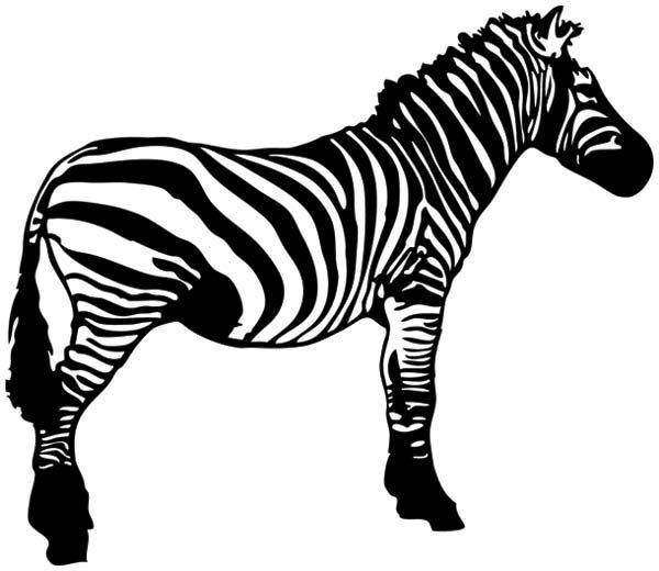 600x520 Zebra clipart black n white