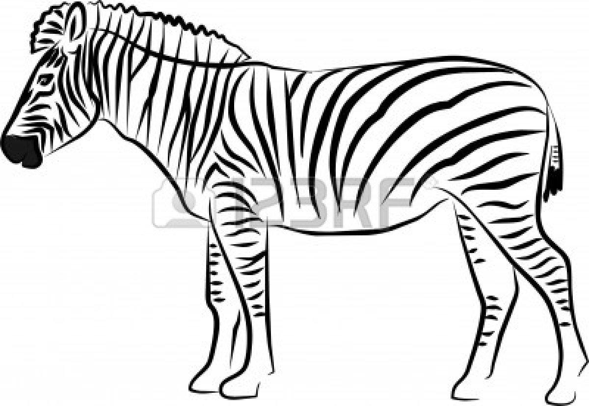 1200x828 Black amp White clipart zebra