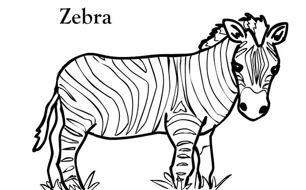 photograph about Zebra Coloring Pages Printable identified as Zebra Coloring Internet pages Absolutely free down load easiest Zebra Coloring