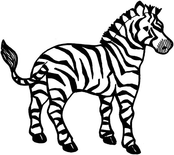 600x533 Innovative Ideas Zebra Coloring Page Zebras Pages Free