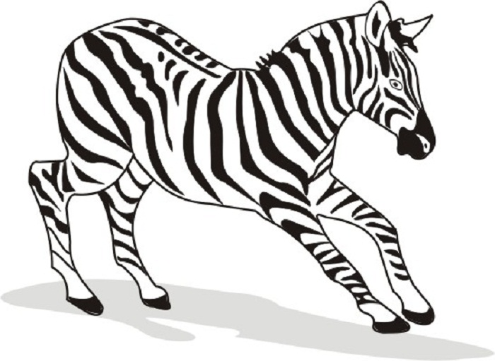 700x511 Zebra Colouring Pages For Kids