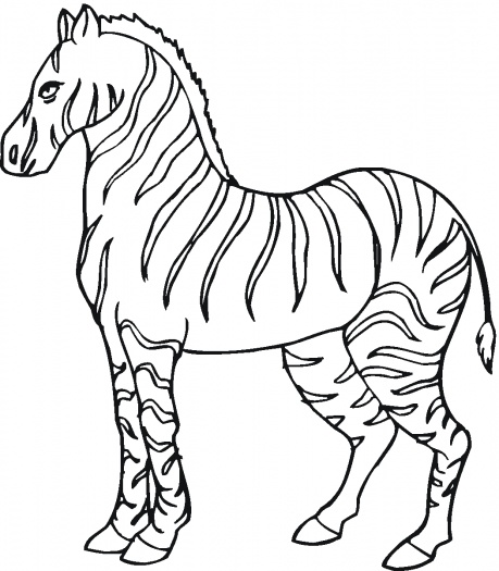 459x525 Zebra Coloring Page Coloring pages wallpaper