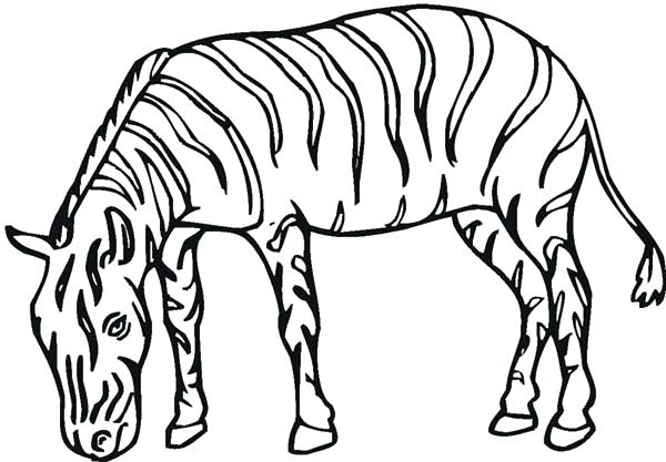 600x417 Zebra Coloring Page Free Pages