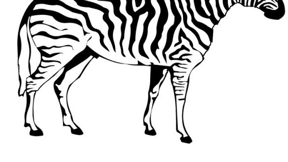 585x329 Zebra Coloring Pages For Preschoolers To Colour In Point Of