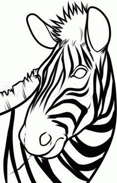 236x370 Draw A Zebra Art Lessons And Illustrators