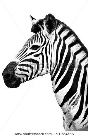 301x470 Zebra Clip Art Black And White Clipart Panda