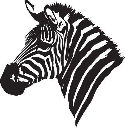 411x418 Zebra Head Premium Clipart