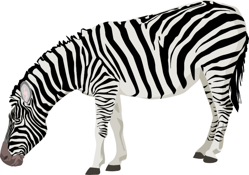 800x561 Zebra Clip Art Royalty Free Animal Images Animal Clipart Org