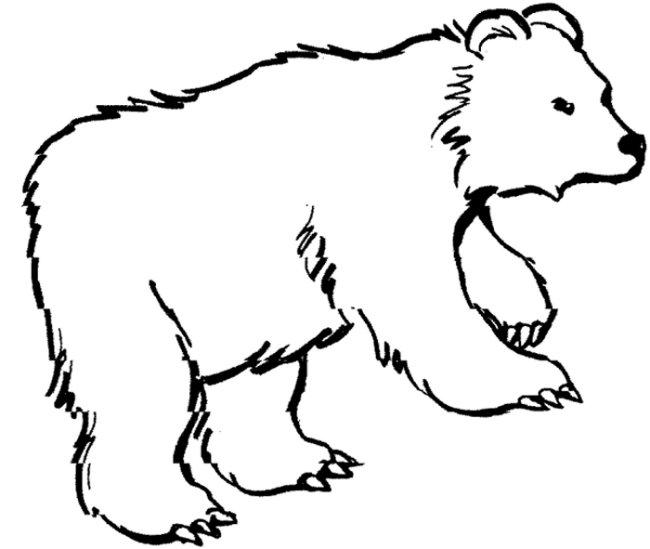 650x549 Bear Coloring Page Baybear Bears Teddy