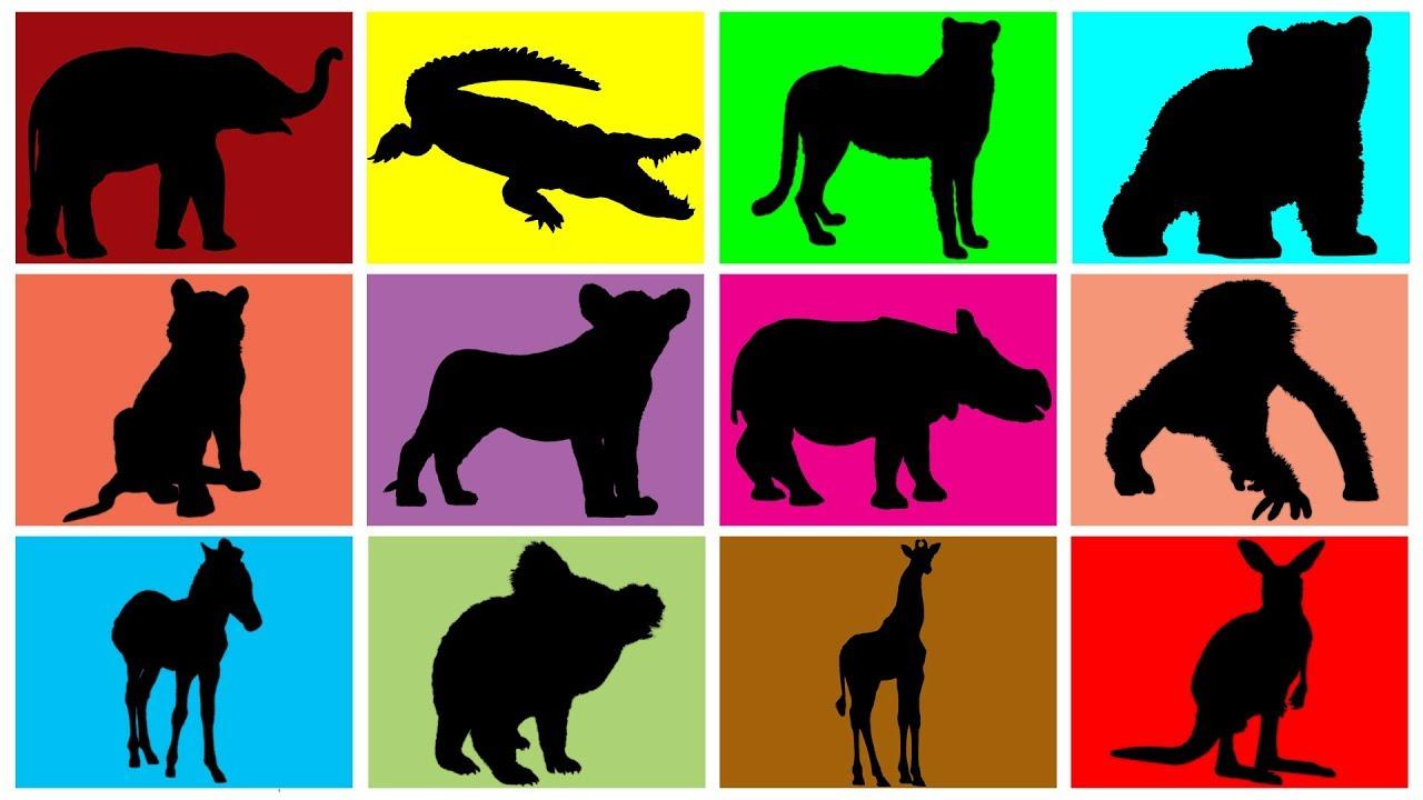 1280x720 Wild Animals For Kids Zoo Animals For Children Learn Wild
