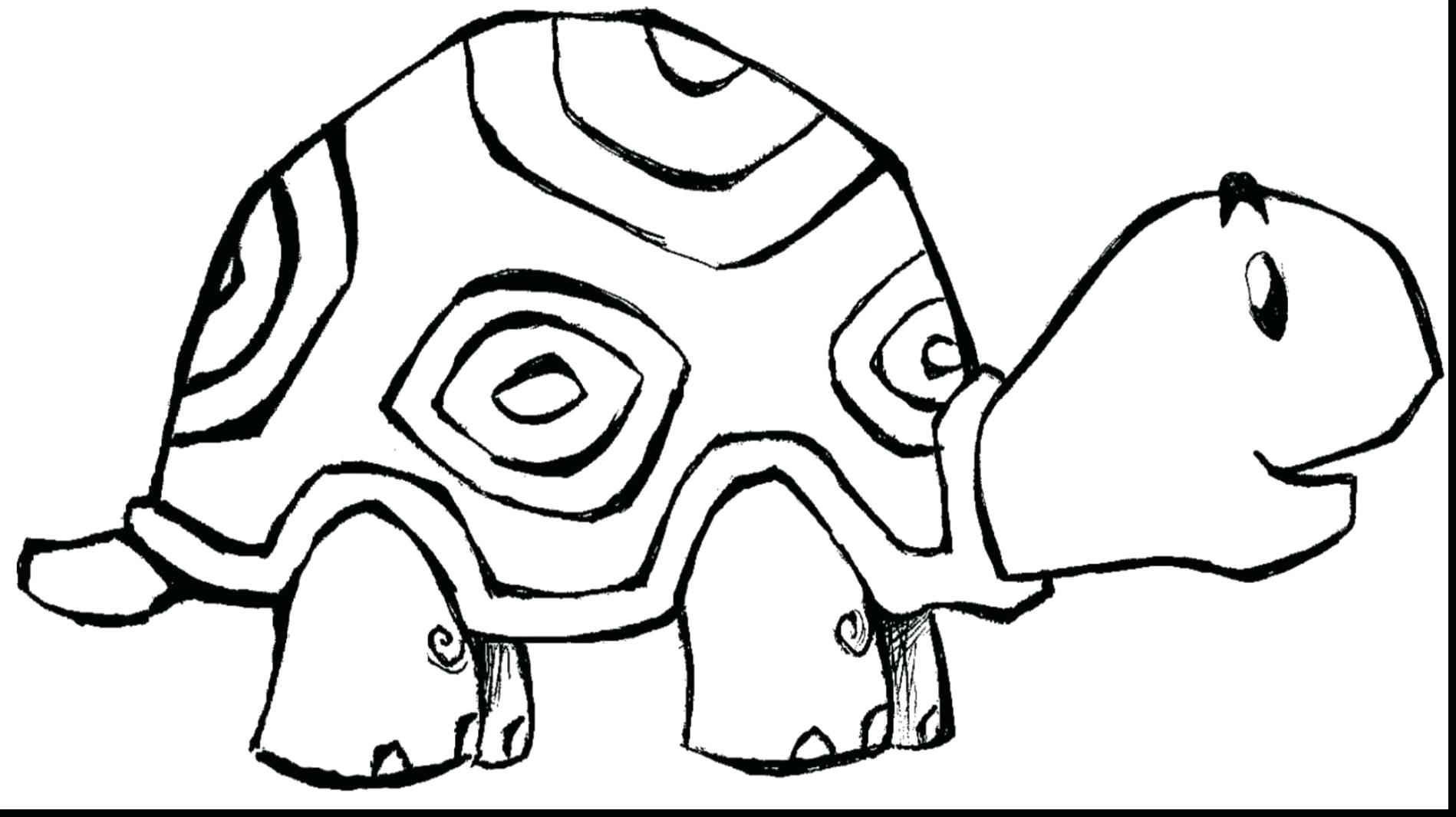 1898x1065 Elephant Preschool Coloring Pages Zoo Animals 134 Remarkable Free